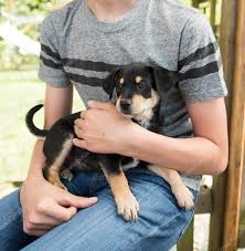 Do Pets Help Kids in Foster Care?